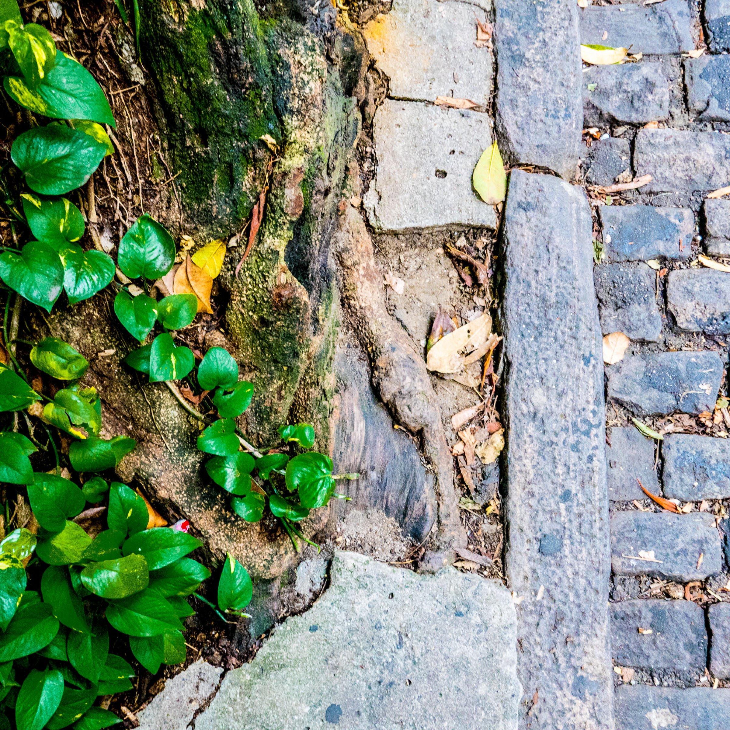 IN DANISH: Drop skåltalerne – vi er ikke så bæredygtige som vi tror